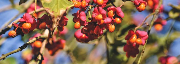 Wildgehölze und Forstpflanzen