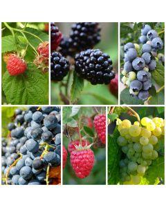 Gemischter Obstgarten mit süßem Obst